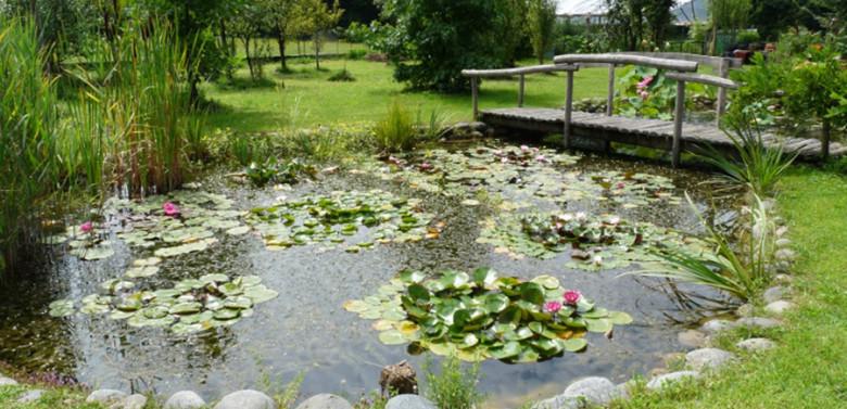 Realizzazione laghetti ornamentali for Laghetti ornamentali da giardino